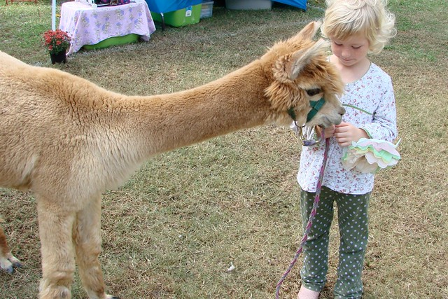 Alpaca with family member explore virgohobbs 39 photos on for Alpaca view farm cuisine