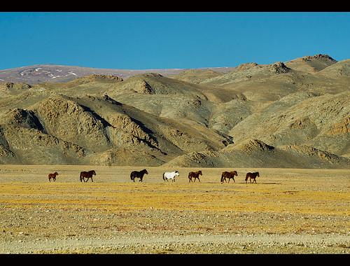 travel horses asian asia mongolia destination oriental orient kazakh grasslands steppe mongolian altai bayanulgii worldlocations bayanolgii bayanölgii