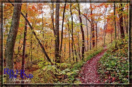 trees ohio fall leaves foliage trail riverislandphotography