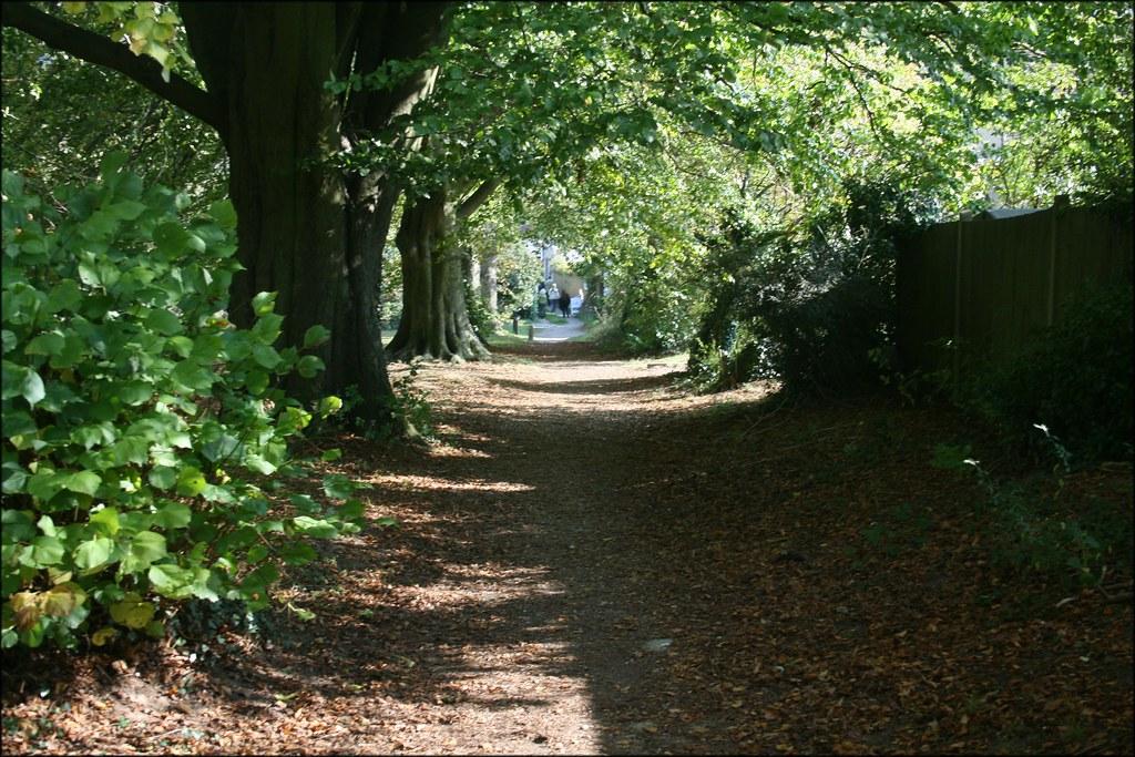Shoreham A tree-lined path near Shoreham, Kent.