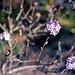 Spring Buds... by Attila con la cámara