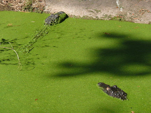 animals zoo jacksonvillezoo eyefi jacksonvillezoogardens