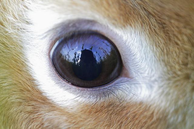 Through my bunny's eye
