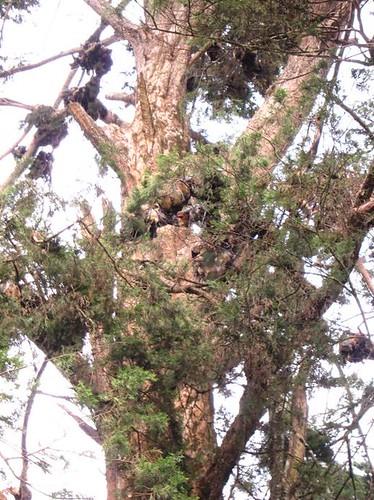 bats in trees uganda