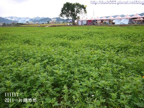 P1130064花海