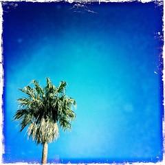 palm tree lollipop