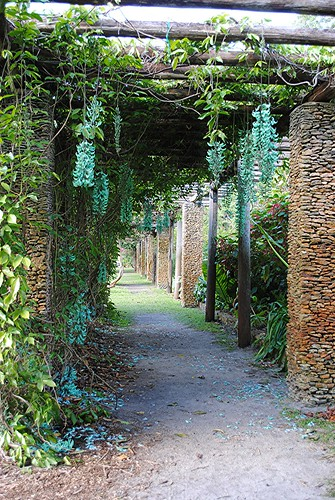 Jade Vine hangs romantically from Vine Pergola by jungle mama
