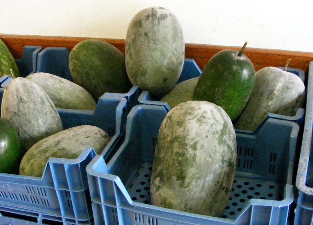 how to grow fuzzy melon