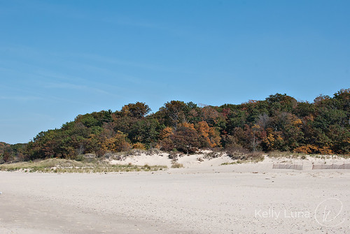 dunes treeline