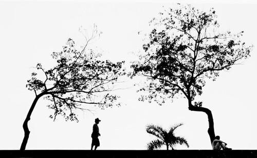 Trees by Pawel Maciejewski