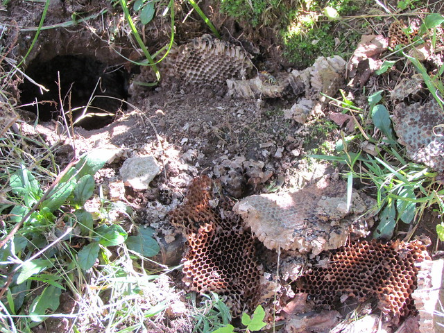 how to get rid of yellow jacket nest in ground