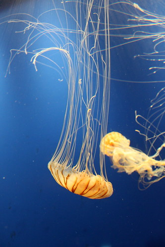 10 October 2011 - Atlanta Aquarium - jellyfish