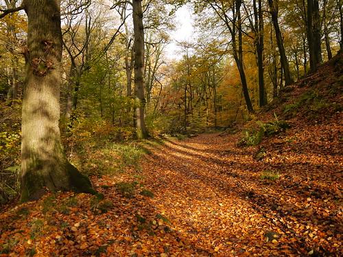 autumn trees leaves shadows lancashire millwood ribblevalley hurstgreen lancashirelassphotos suebristo