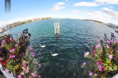 Lac de Genève Fisheye