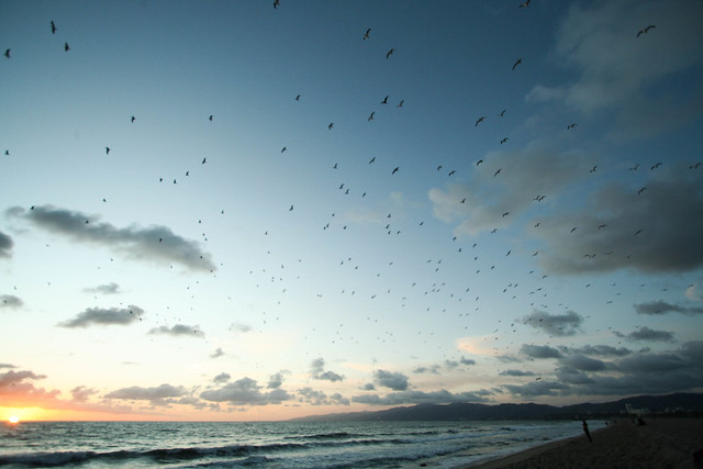 Bird behavior | Predicting weather without gadgets