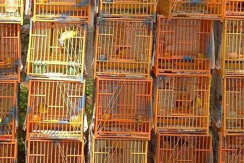 The birds of the Bird Market