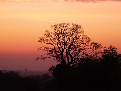 uk morning autumn sky orange cloud tree silhouette wales sunrise wrexham northwales thecull