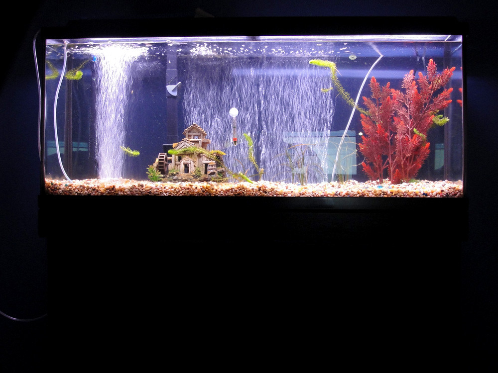 Dual 20 gallon and 55 gallon fishless water cycle and for How much does a 20 gallon fish tank weigh