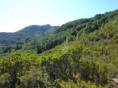 Sentier Capeddu-Sari : dans la descente de Bocca di Renosu vers Alzeta Longa, la crête du Renosu et Punta Batarchjone