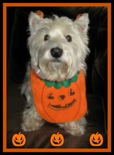 "10/12B ~ Riley ~ ""My Little Pumpkin"""
