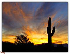November 2011 in Tucson