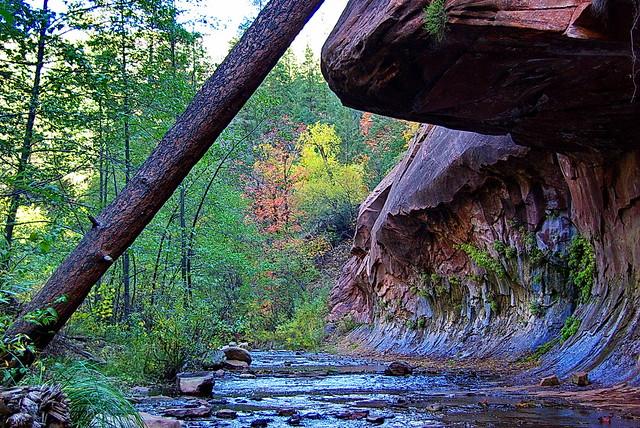 West Fork of Oak Creek - Sedona
