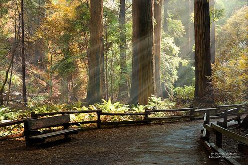 sanfrancisco travel sunlight nature creek landscape ancient marin illumination canyon muirwoods ravine redwoods sunrays tours muirbeach johnmuir nationalmonument illuminate protected deepforest redwoodforest darvin atkeson tallesttrees darv liquidmoonlightcom