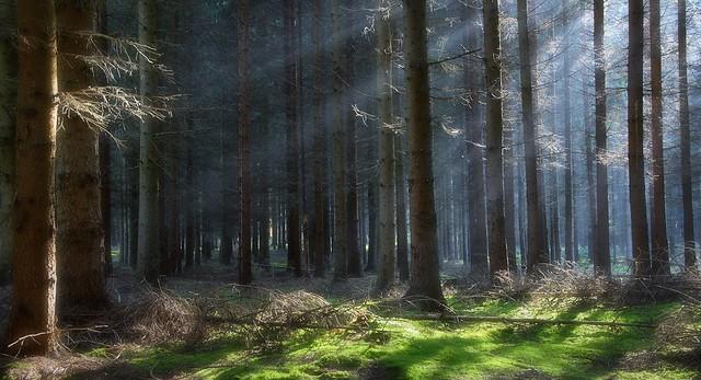 Magic Wood II