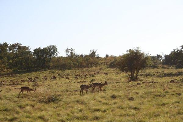 africanbush