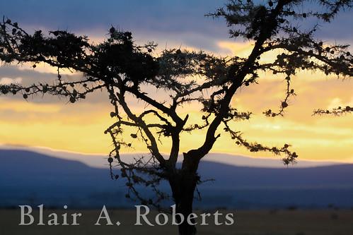 africa sunset canon kenya acacia lightroom laikipia olpejetaconservancy