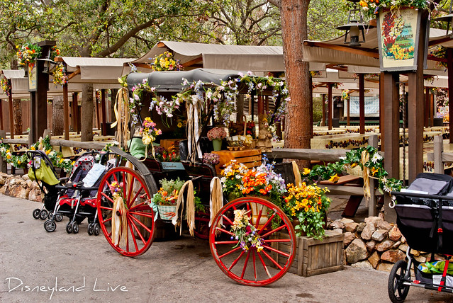 Spring Time at Big Thunder Ranch