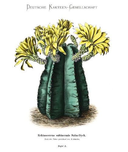 003-Bluhende Kakteen (Iconographia Cactacearum)-Tomo 1-1904-1921- Karl Moritz Schumann y otros-cortesía de www.cactuspro.com