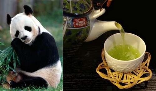 pandapoop