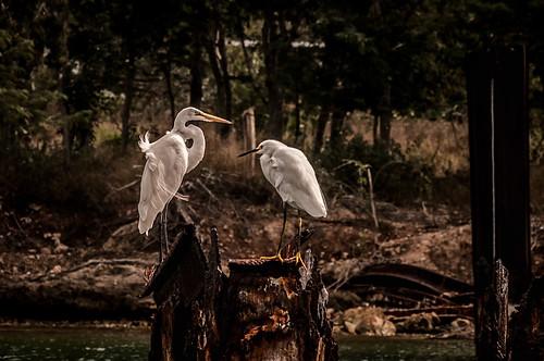 Aves de Paso  by Rey Cuba
