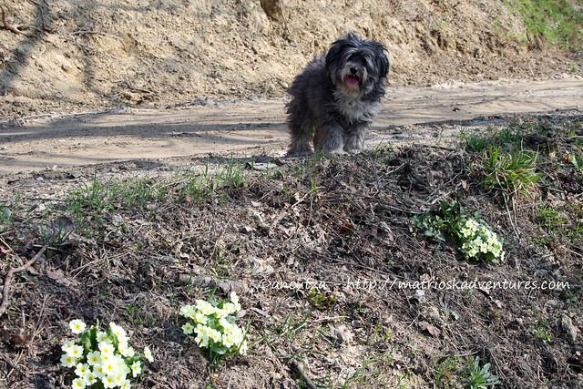 immagini cane e fiorellini