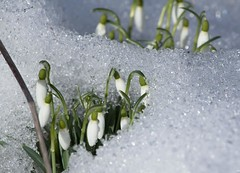 Kevad. Spring.