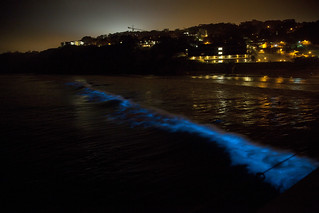 Bioluminescent red tide at Scripps Pier
