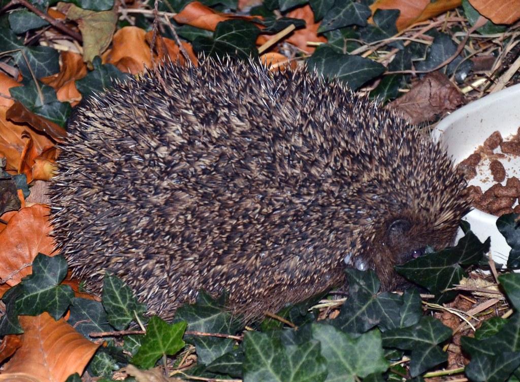 Hedgehog Food Slugs Wont Eat