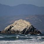 Guano island off Ocean Beach
