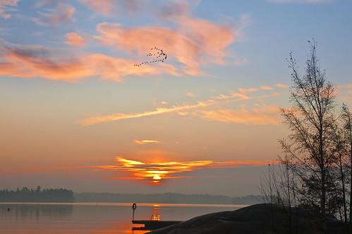 sea bird sunrise espoo finland westend rantaraitti