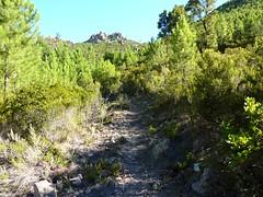 En Haut-Cavu, il y a le bon et le mauvais sentier. Le bon sentier, il monte, ...