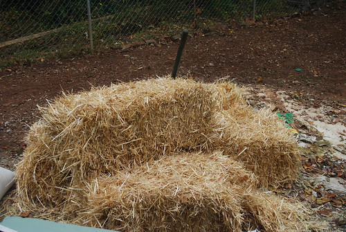 Hay for the backyard