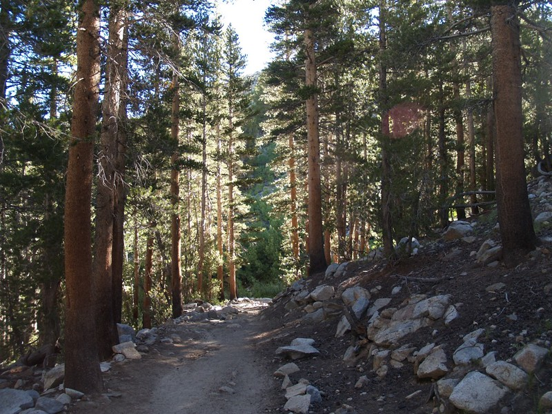 Tall pine trees on the Bishop Pass Trail as we near South Lake
