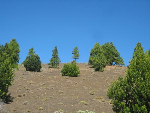 Azul y pinos cerca de Malpaso II