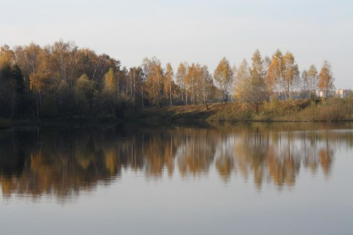 autumn trees sky plants house reflection nature water yellow pond branches