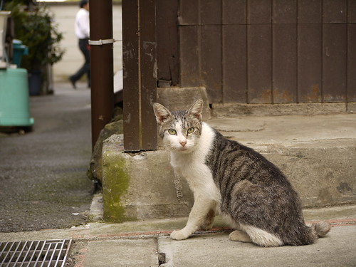 猫@藤沢市