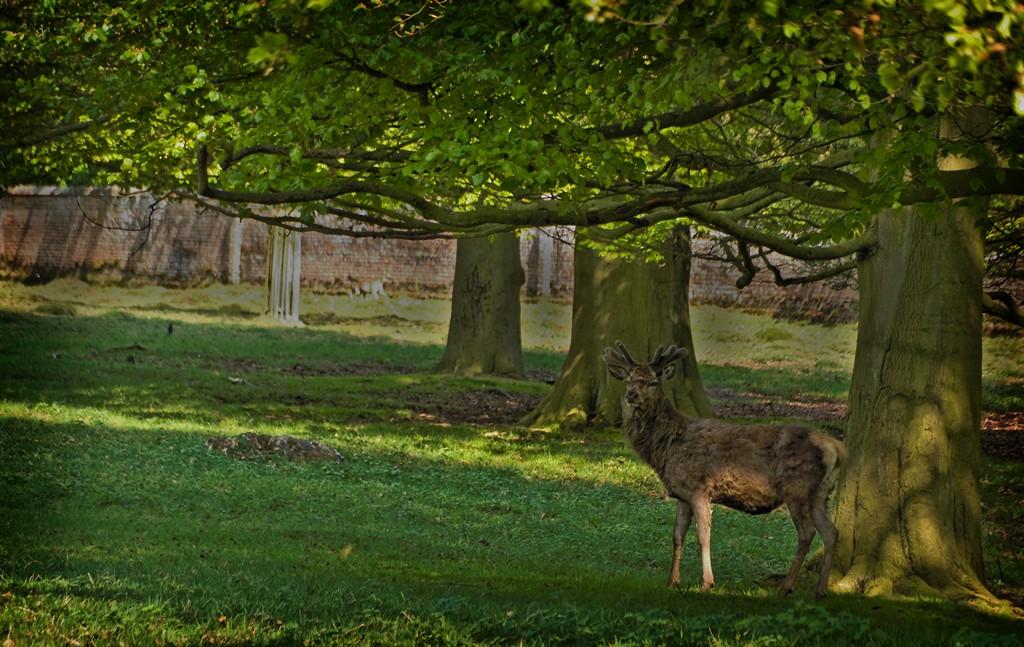 Deer in Woburn Park SWC 1 17_20110423_06_DxO_1024x768