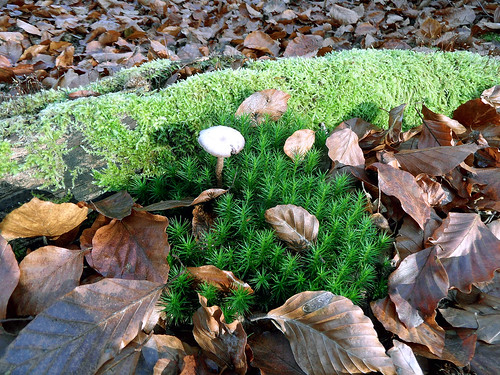 Mini-Landschaft mit Pilz