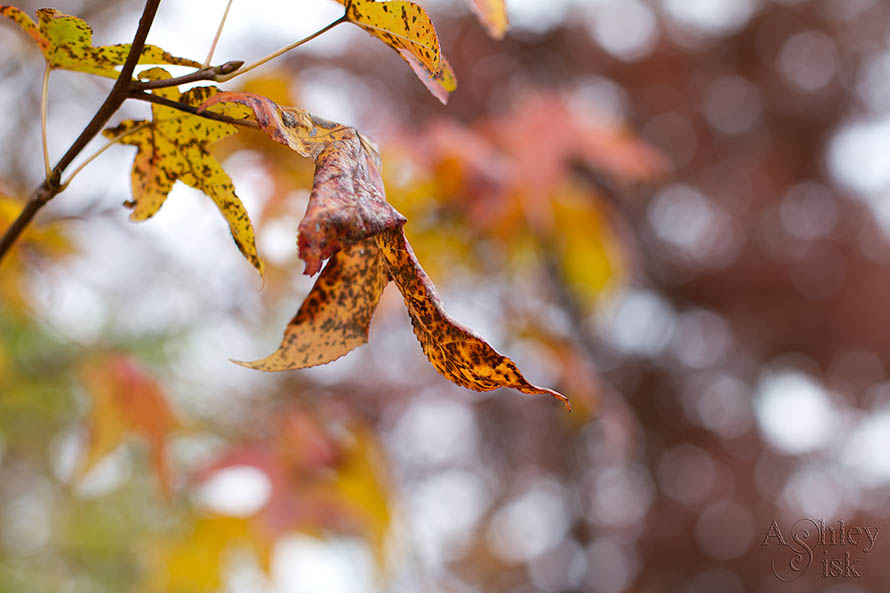 Autumn Bokeh SOOC