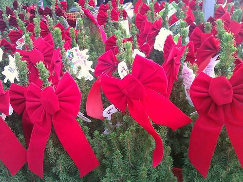 Plants at Home Depot in DC November 20, 2011
